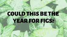 Could This Be The Year For Figs?